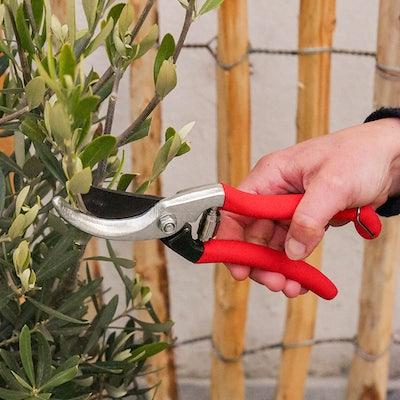taille-arbuste-en-pot