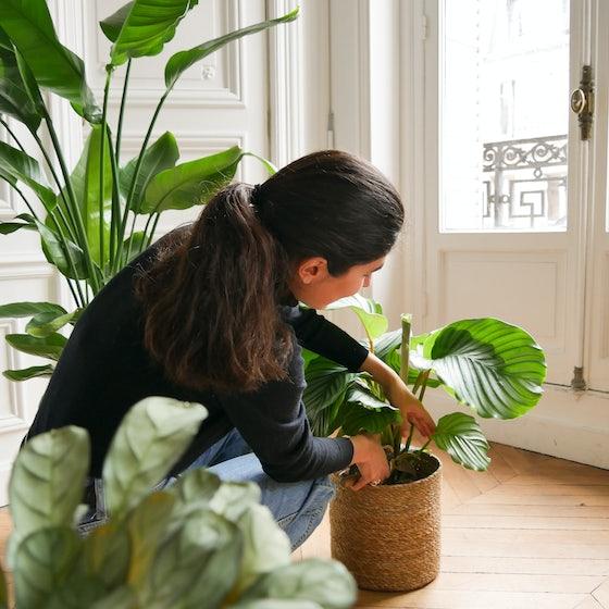 Entretien d'une plante