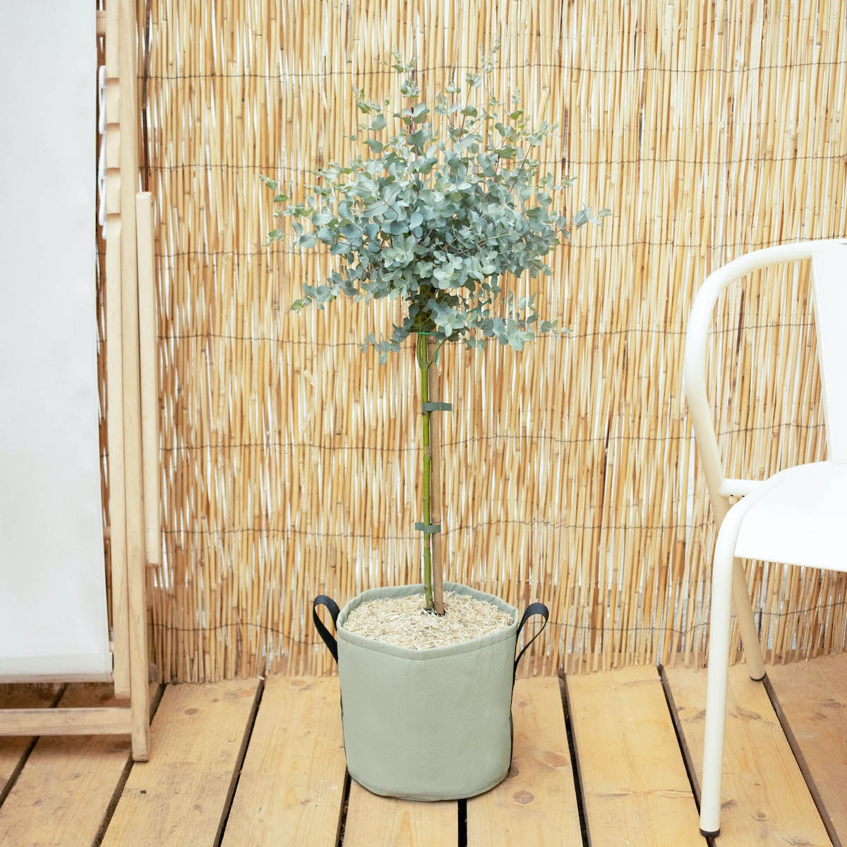 Francesco et son pot BACSAC® - Eucalyptus