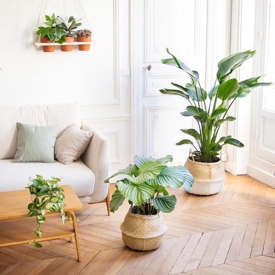 Grandes plantes dans un salon