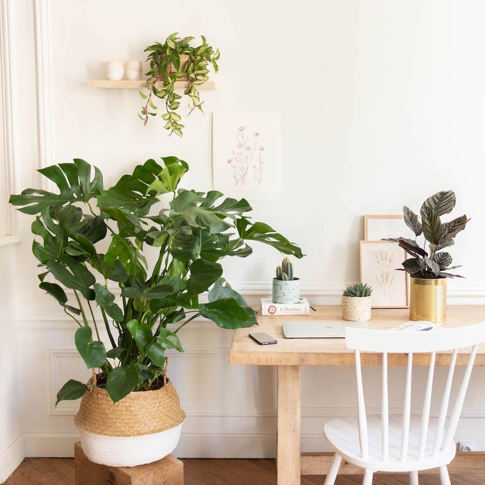 Arbeitsplatz mit Pflanzen