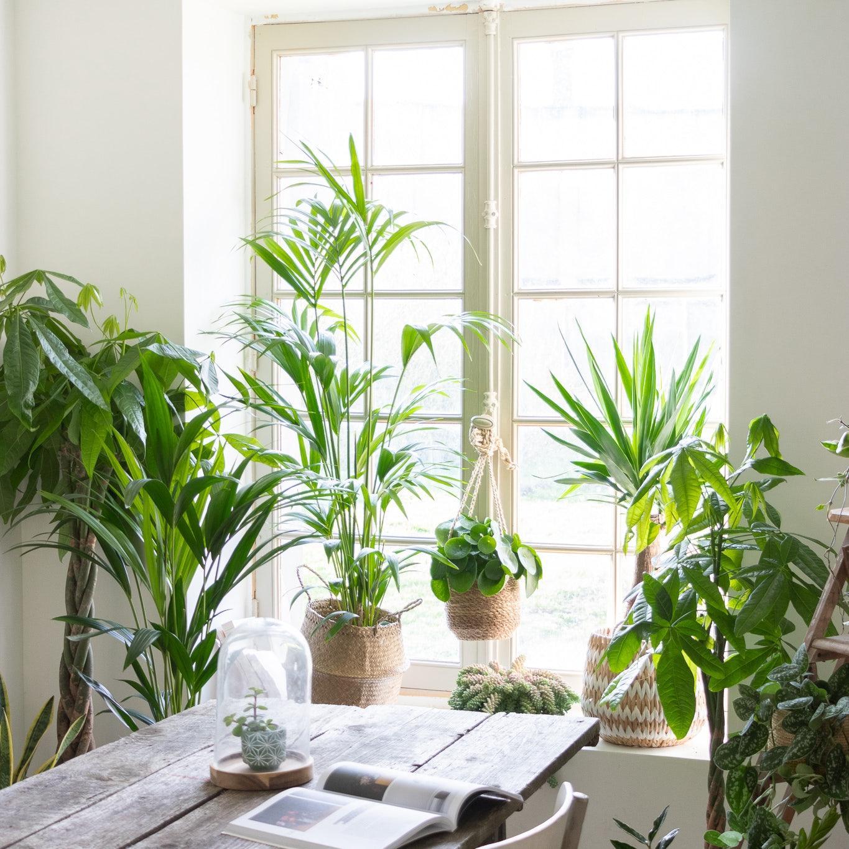 Schöne Pflanzen an einem Fenster