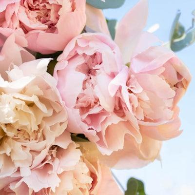 Nahaufnahme unseres Guérande Blumenstraußes