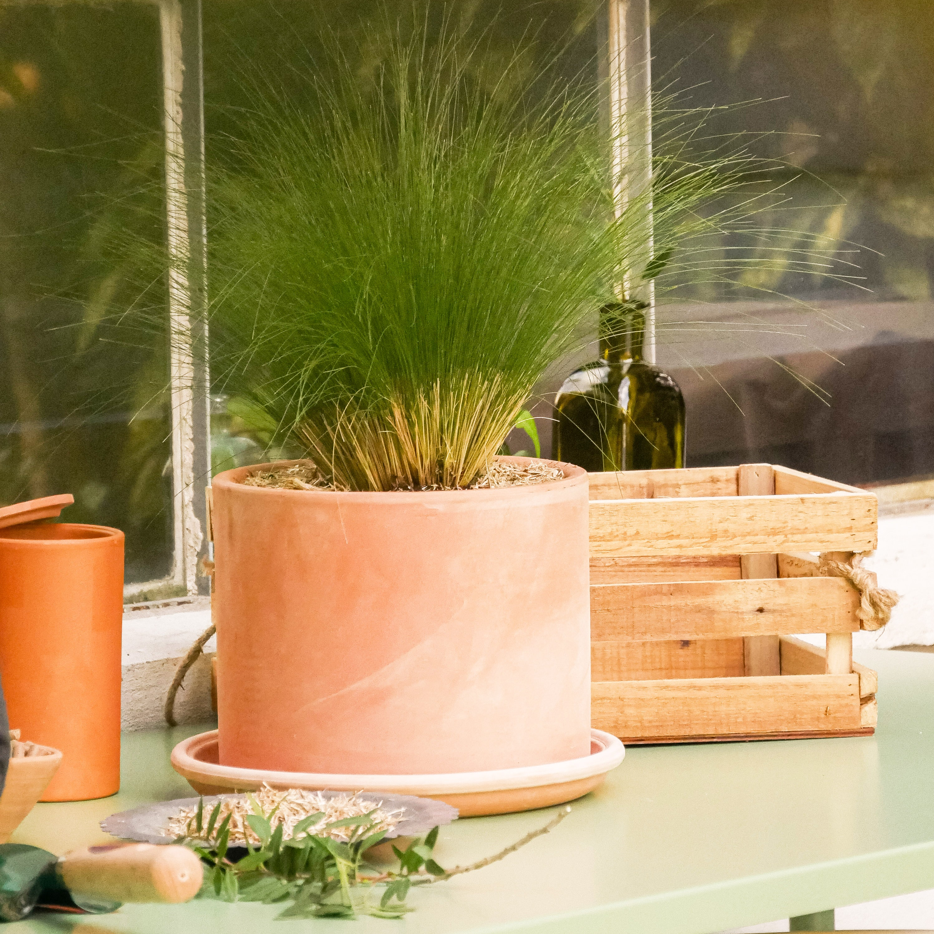 rempotage-plante