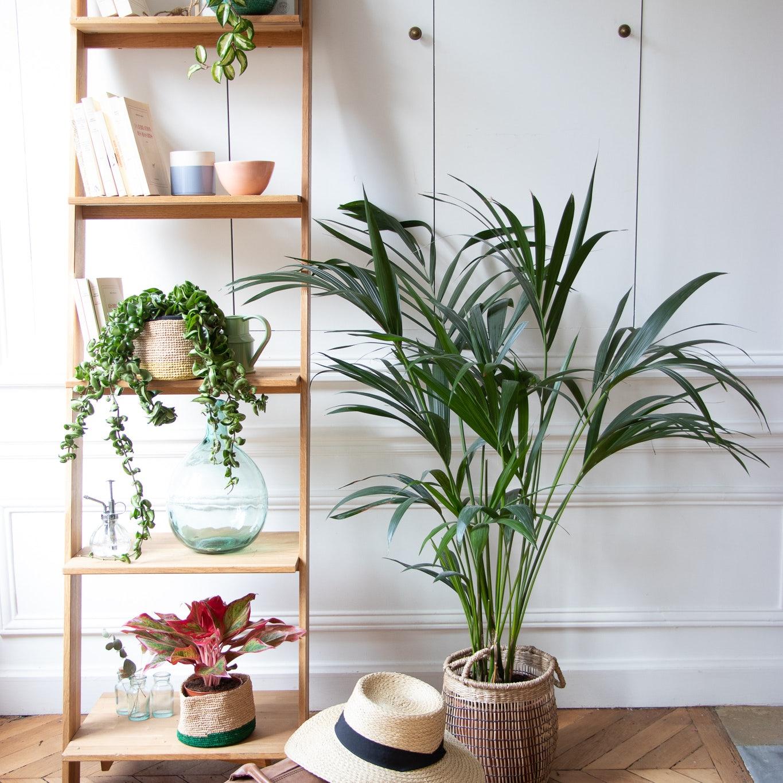 Pflanzenleiter Areca Palme Tasche und Hut