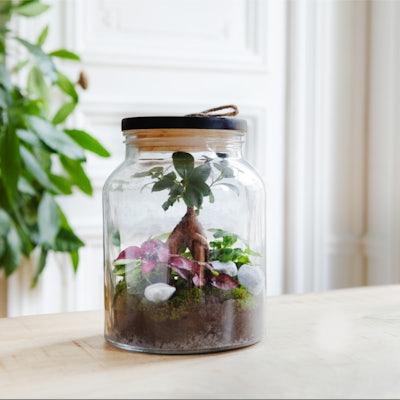 DIY réaliser Terrarium