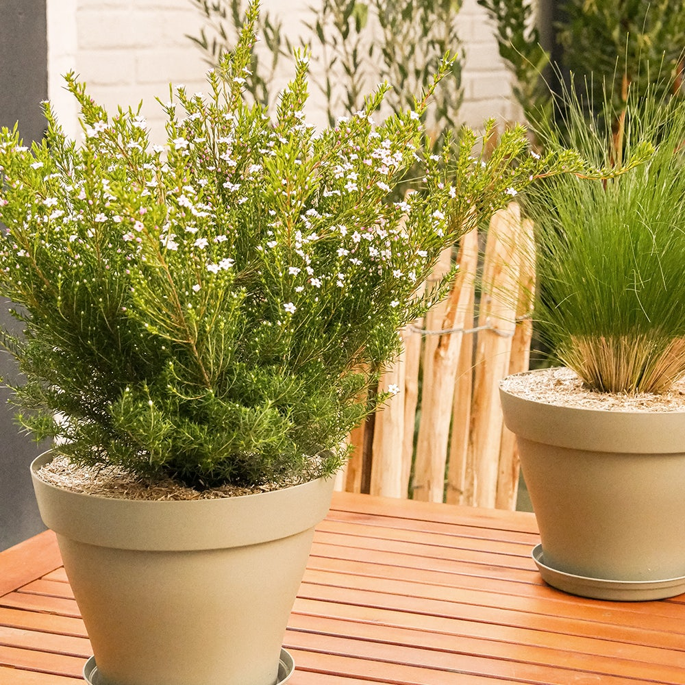 proteger-plante-hiver