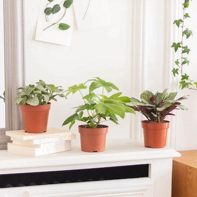 Alfred - Plantes vertes sans cache-pot