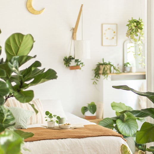 plante-originale