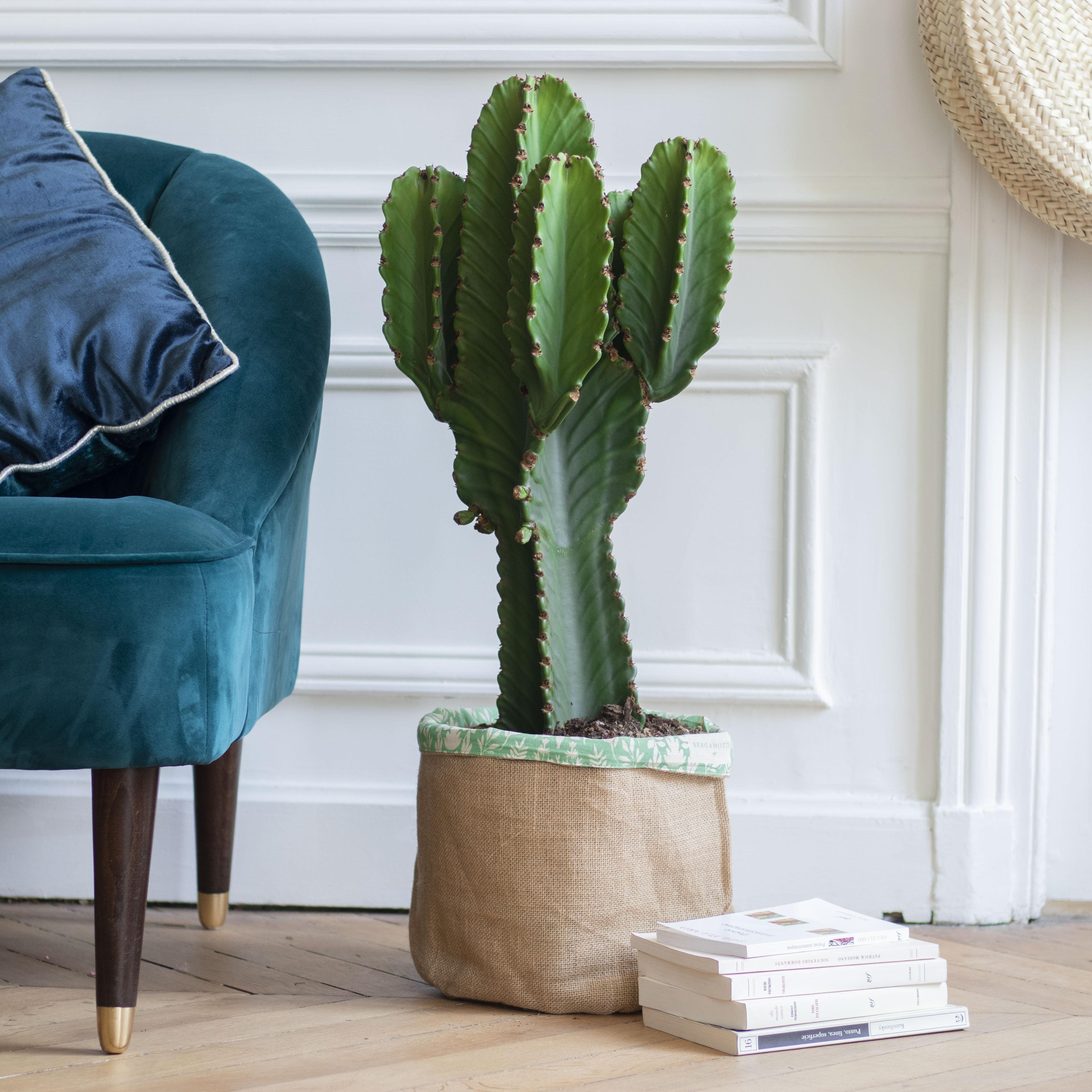 cactus décoration d'intérieur