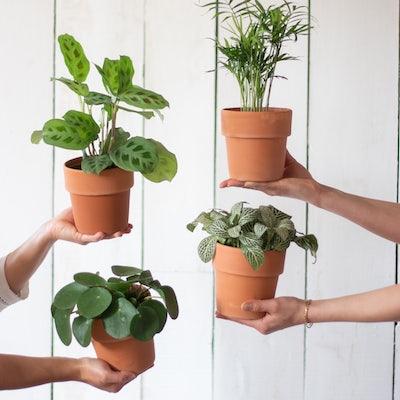 4 petites plantes