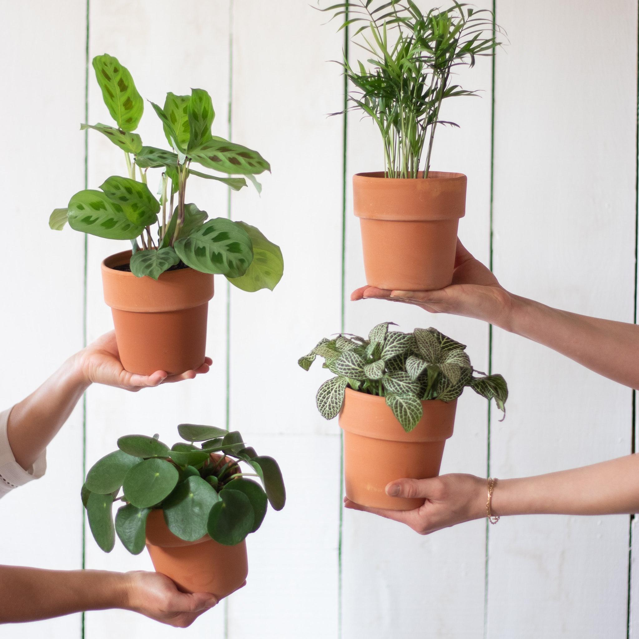 variétés de plantes vertes