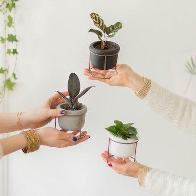 """Unser Pflanzen-Set """"Willy"""" für dein Zuhause"""