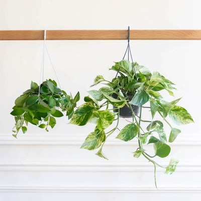 Betty - Duo de plantes suspendues sans cache-pot