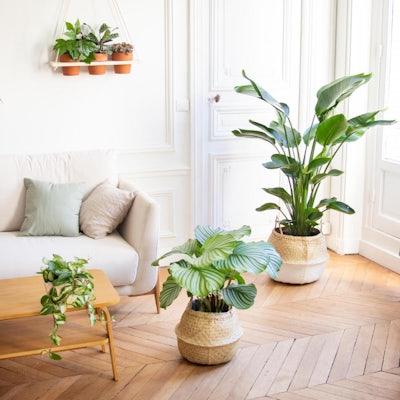 Tribu déco - Assortiment de 6 plantes et leurs cache-pots