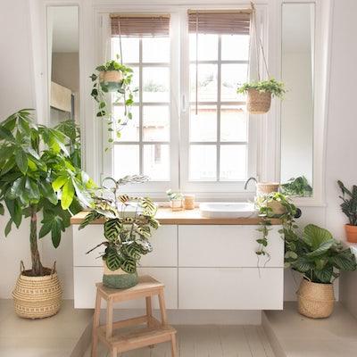 salle de bain plantes d'intérieur décoration bergamotte