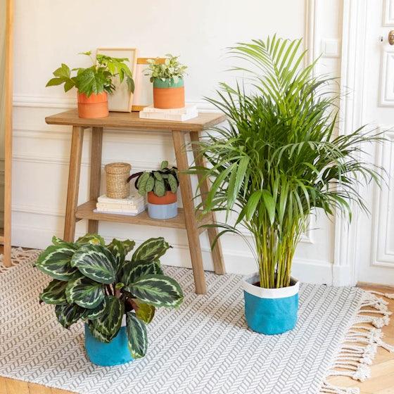 Tribu verte - Sélection de plantes d'intérieur avec cache-pots