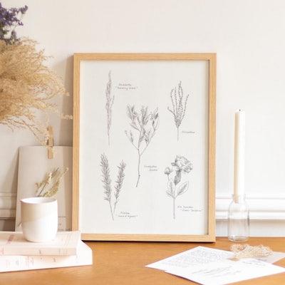 Cadre gravure Herbier