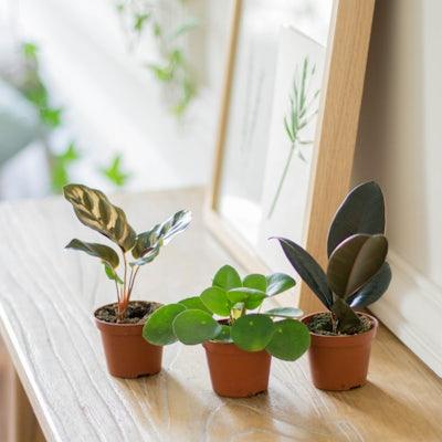 Willy - Plantes sans cache-pots