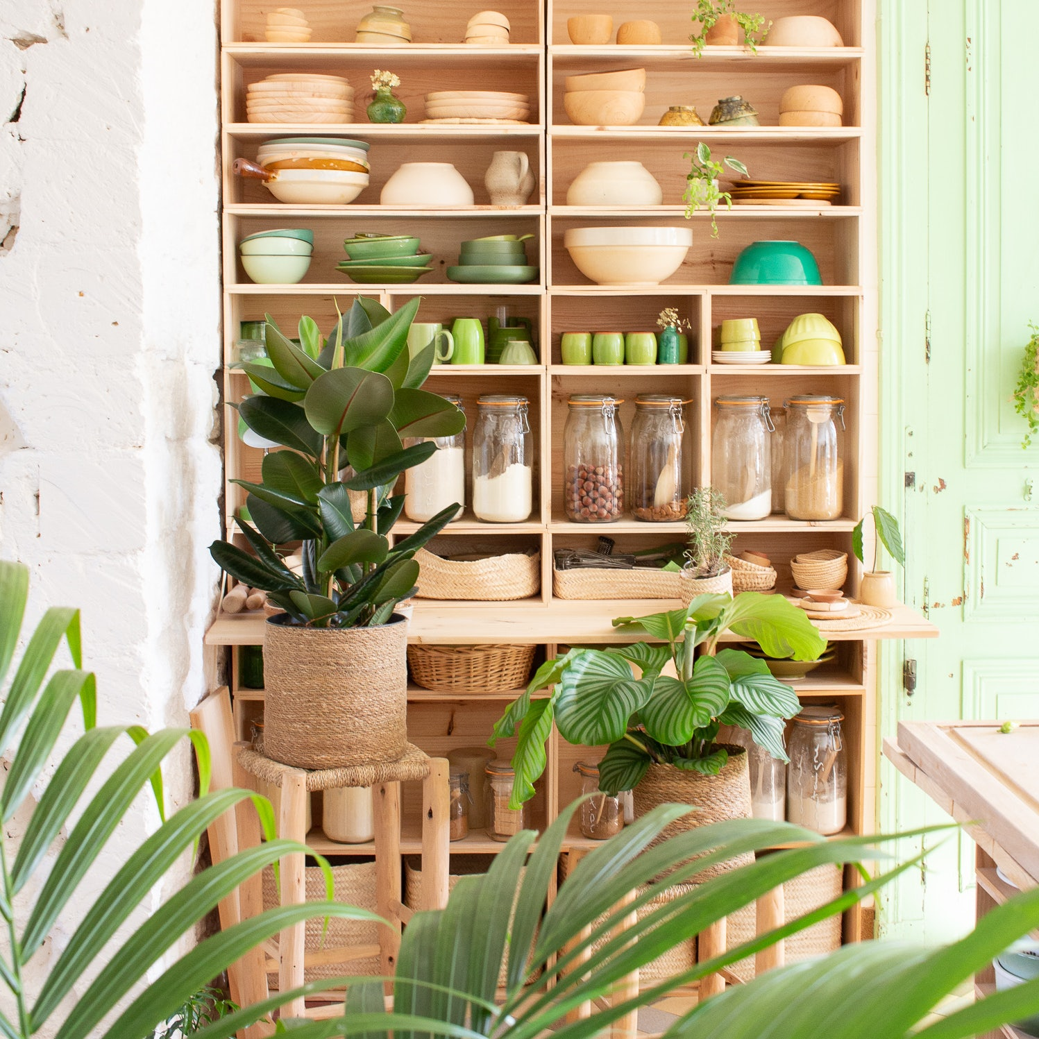plante-d-appartement