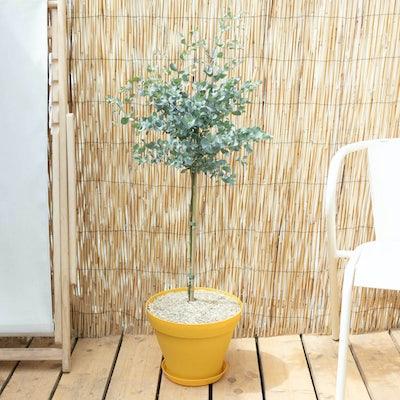 Francesco & Topf (gelb) - Eucalyptus