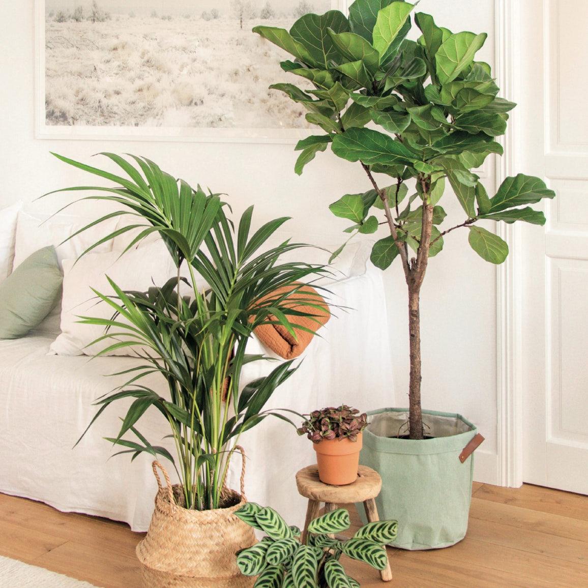adopter-plante-verte-originale
