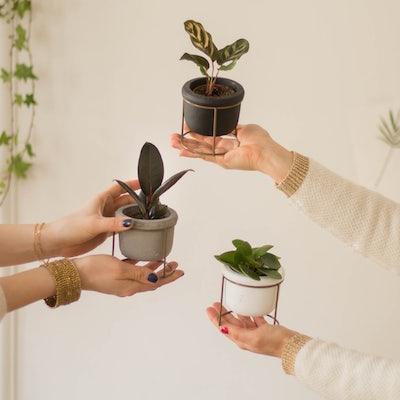 Willy - Plantes avec cache-pots