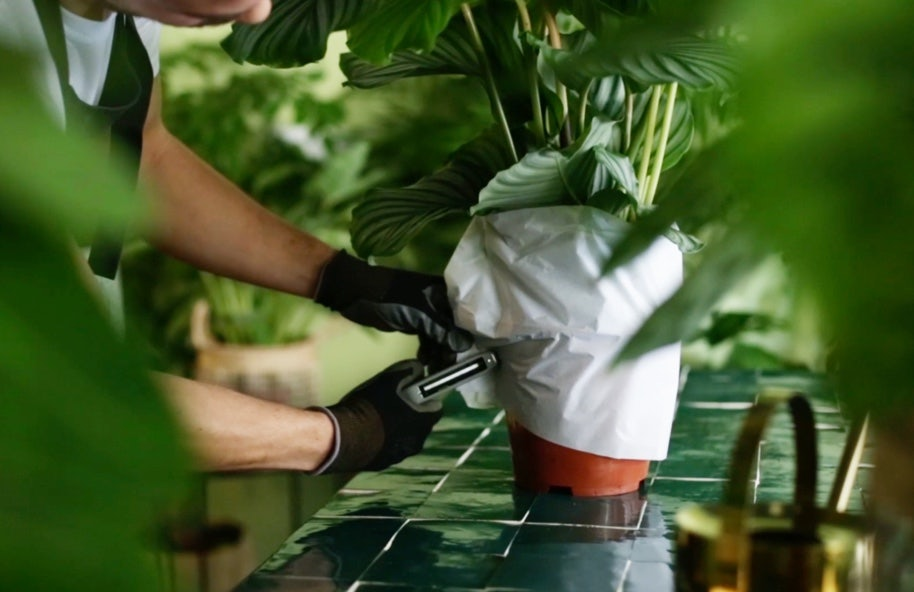 Plant Care Packaging