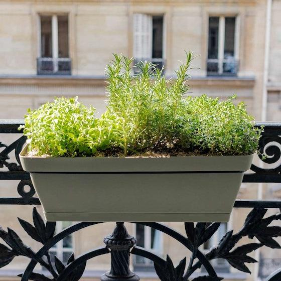 Alix et sa balconnière verte - Aromatiques