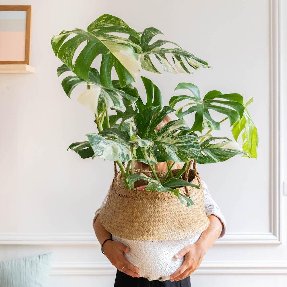 plante-verte-interieur