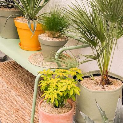 entretien-plantes-exterieur-en-pot