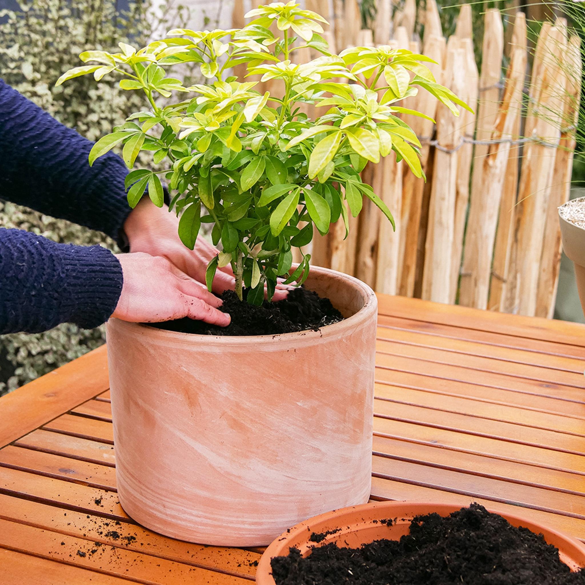 comment-rempoter-une-plante-d-exterieur