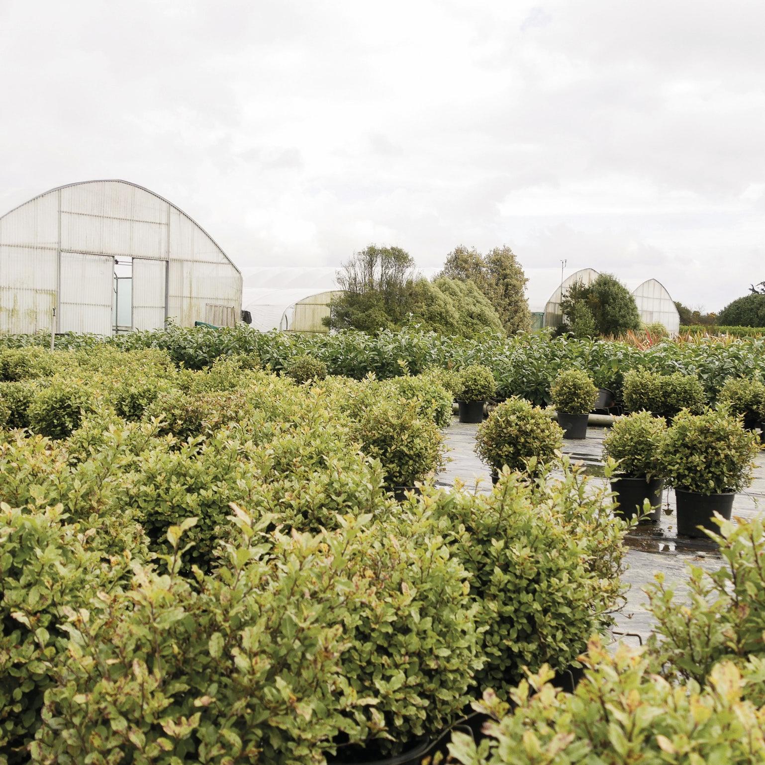 producteur-jardin