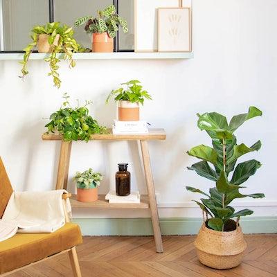 Pflanzen im Wohnzimmer
