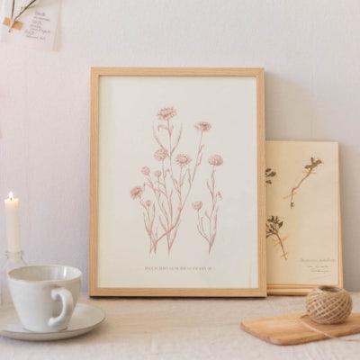 Strohblumen Illustration